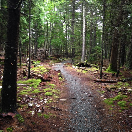 Hiking trail in Acadia